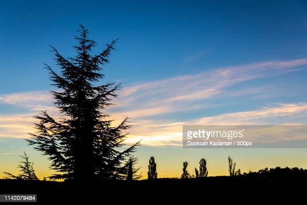 silhouette tree on hill at dawn - clingman's dome - fotografias e filmes do acervo