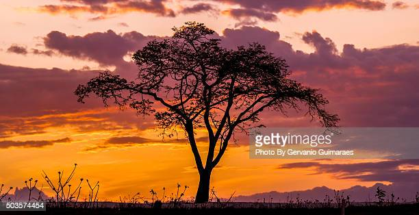 silhouette tree - silhueta stock photos and pictures