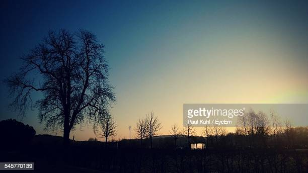 Silhouette Trees Against Clear Sky At Dusk