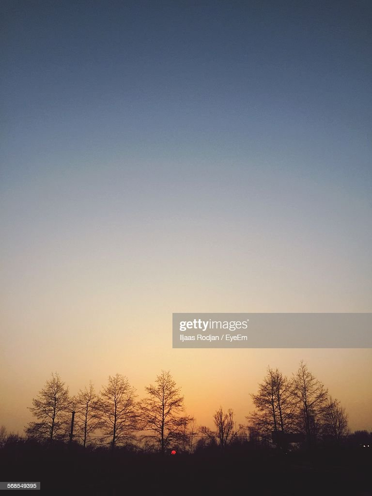 Silhouette Trees Against Clear Sky At Dusk : Stock Photo