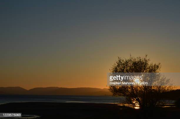 silhouette trees against clear sky during sunset - river clyde stock pictures, royalty-free photos & images
