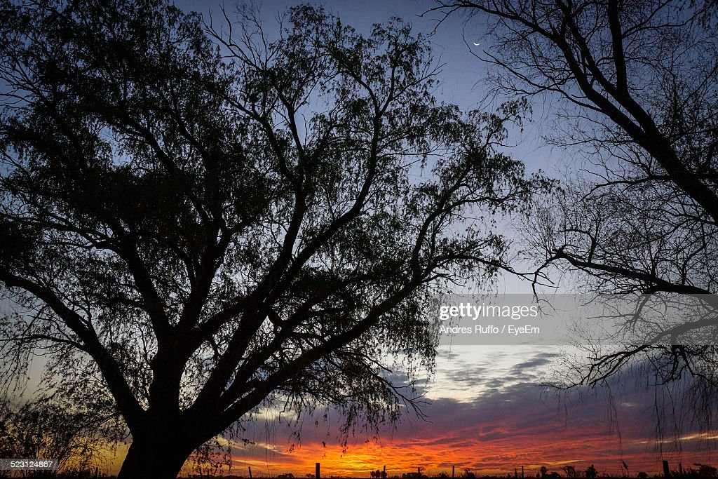 Silhouette Trees Against Cloudy Sky At Sunset : Stock Photo
