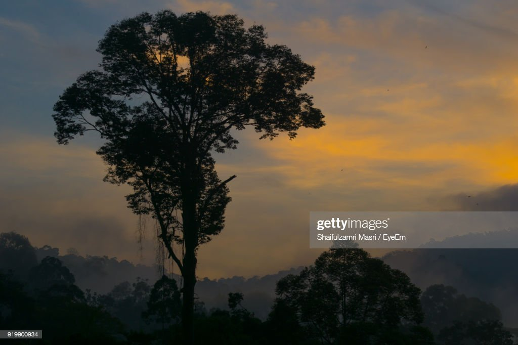 Silhouette Trees Against Cloudy Sky During Sunset : Stock Photo