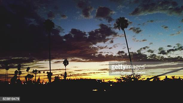 silhouette trees against dramatic sky at sunset - carvajal stock photos and pictures