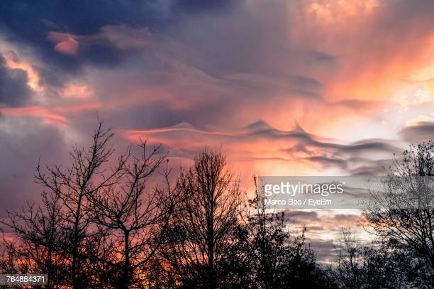 silhouette trees against dramatic sky during sunset - bos stock pictures, royalty-free photos & images