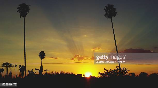 silhouette trees against orange sky at sunset - carvajal stock photos and pictures