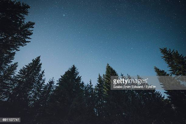 silhouette trees against sky at night - low angle view stock pictures, royalty-free photos & images