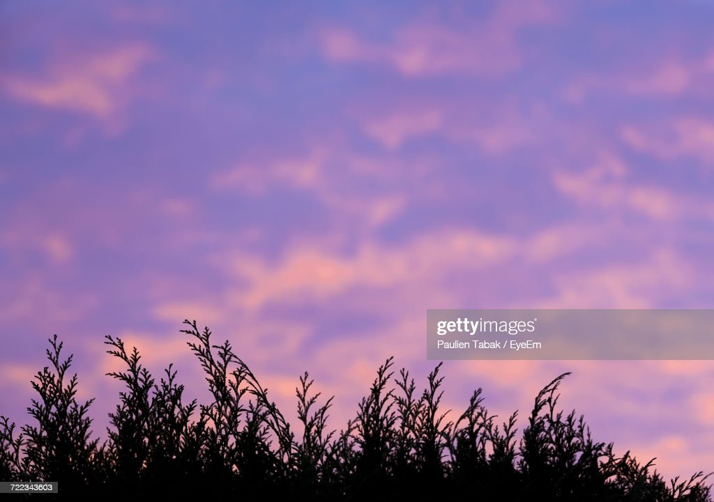 Silhouette Trees Against Sky At Sunset : Stockfoto