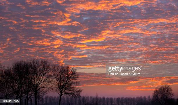 silhouette trees against sky at sunset - paulien tabak stock-fotos und bilder