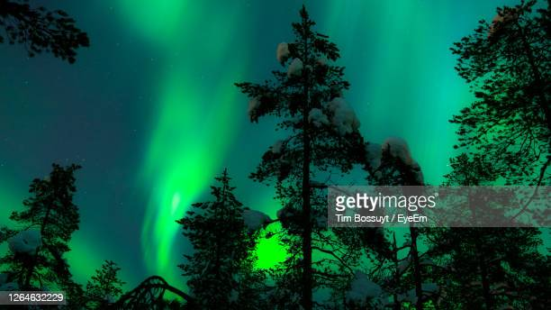 silhouette trees against sky during aurora borealis - finland stock pictures, royalty-free photos & images