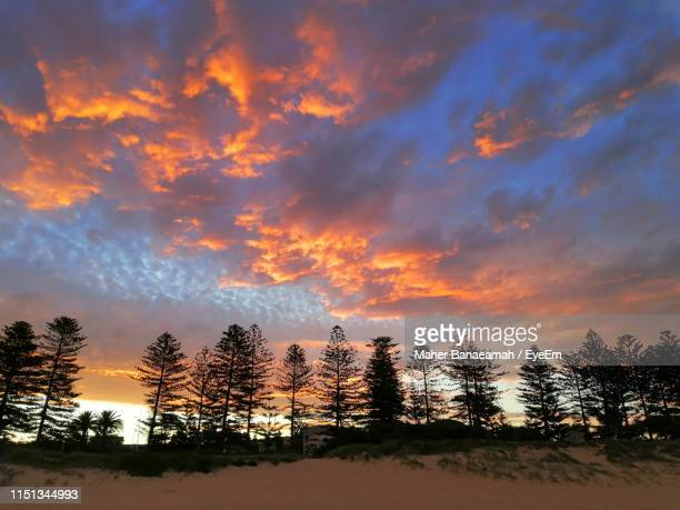 silhouette trees against sky during sunset - wollongong stock pictures, royalty-free photos & images
