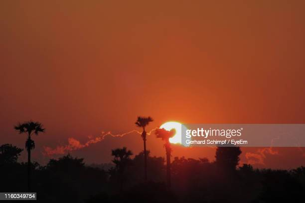 silhouette trees against sky during sunset - gerhard schimpf stock pictures, royalty-free photos & images
