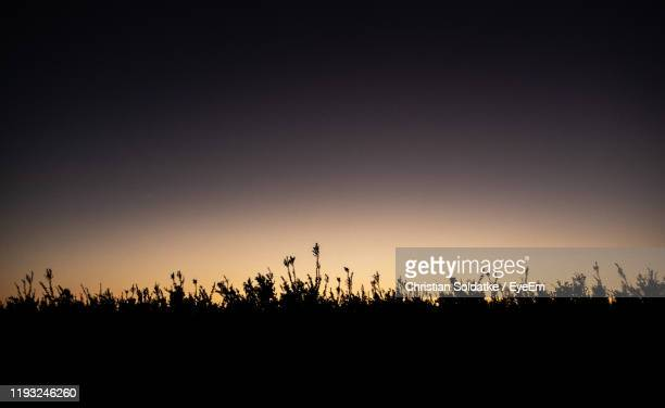 silhouette trees against sky during sunset - christian soldatke stock pictures, royalty-free photos & images