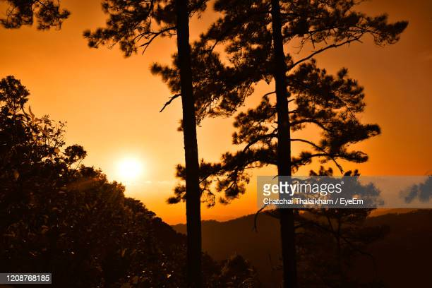 silhouette trees against sky during sunset - chatchai thalaikham stock pictures, royalty-free photos & images