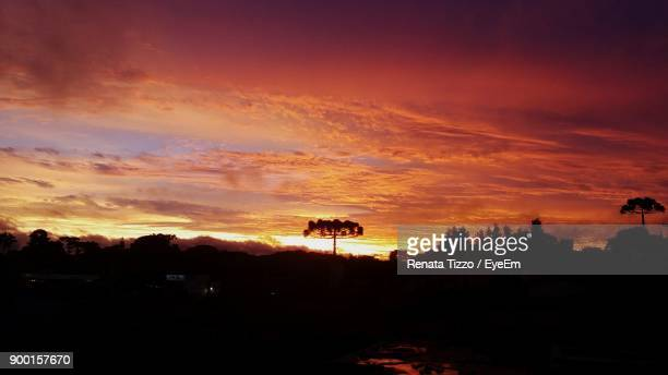 silhouette trees against sky during sunset - curitiba stock pictures, royalty-free photos & images