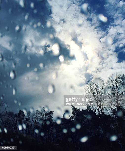 silhouette trees against sky seen through glass window - paulien tabak stock pictures, royalty-free photos & images