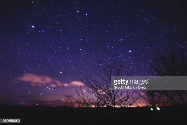 silhouette trees against star field at night - 長野市 ストックフォトと画像