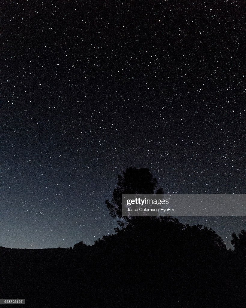 Silhouette Trees Against Star Field : Stock Photo