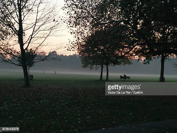 Silhouette Trees At Park In Foggy Weather During Sunset