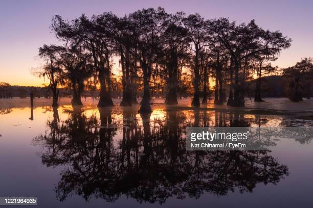 silhouette trees by lake against sky during sunset - 落羽松 ストックフォトと画像