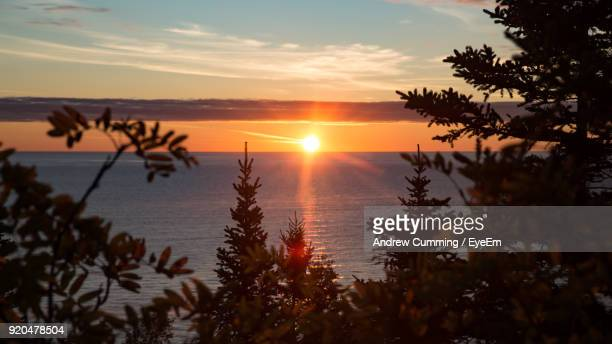 silhouette trees by sea against sky during sunset - duluth minnesota stock pictures, royalty-free photos & images