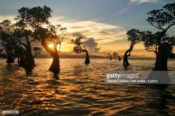 Silhouette Trees By Sea Against Sky During Sunset