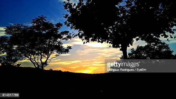 silhouette trees growing on field against sky during sunset - margaux stockfoto's en -beelden
