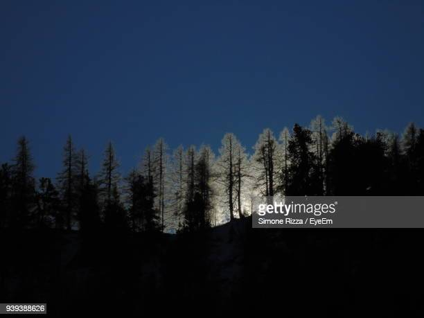 silhouette trees in forest against clear sky - バルドネキア ストックフォトと画像