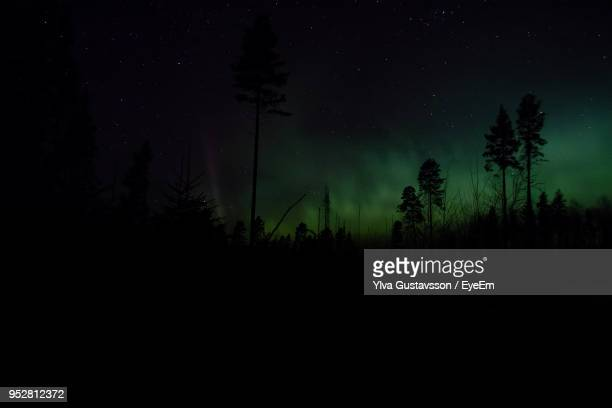 silhouette trees in forest against sky at night - 真夜中 ストックフォトと画像