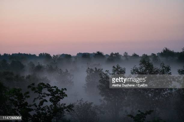 silhouette trees in forest against sky during sunset - duchene stock photos and pictures