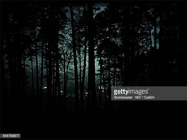 Silhouette Trees In Forest At Night