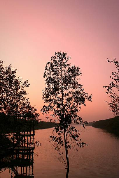 Silhouette Trees In Front Of River Against Clear Sky During Sunset