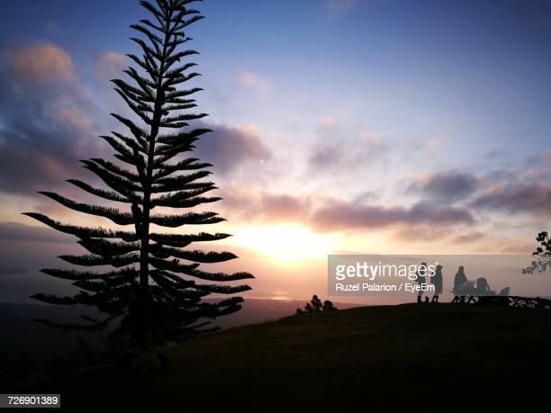 silhouette trees on beach against sky at sunset - negros oriental stock pictures, royalty-free photos & images
