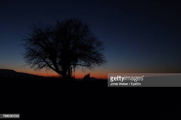 Silhouette Trees On Field Against Clear Sky At Sunset