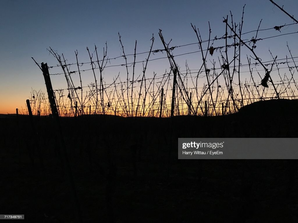 Silhouette Trees On Field Against Sky At Sunset : Stock Photo