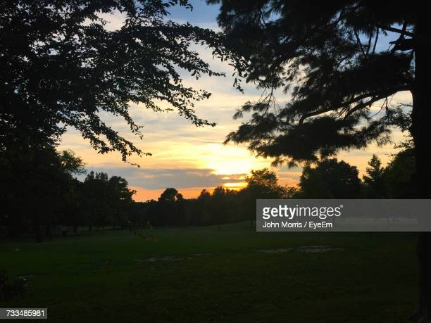 silhouette trees on field against sky at sunset - bethesda maryland stock pictures, royalty-free photos & images