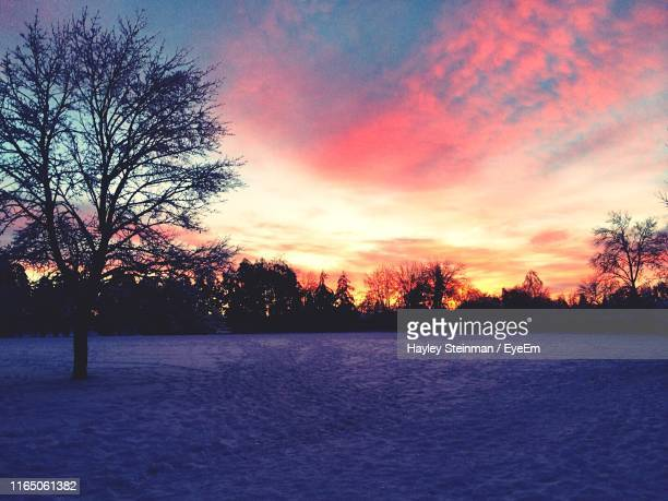 silhouette trees on field against sky during sunset - マーカム ストックフォトと画像