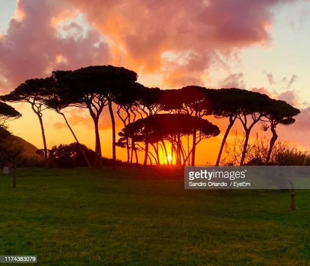 silhouette trees on field against sky during sunset - file:the_wyoming,_orlando,_fl.jpg stock pictures, royalty-free photos & images