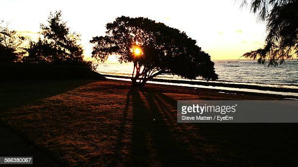 silhouette trees on sea shore against sky during sunrise - steve matten stock pictures, royalty-free photos & images