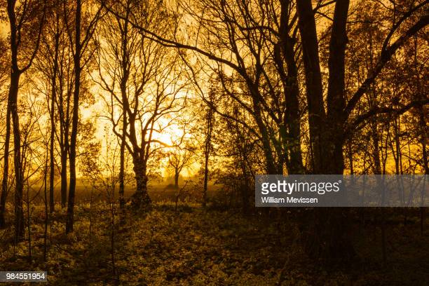 silhouette trees - william mevissen stock pictures, royalty-free photos & images
