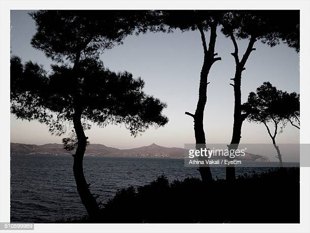 Silhouette trees with calm lake against clear sky