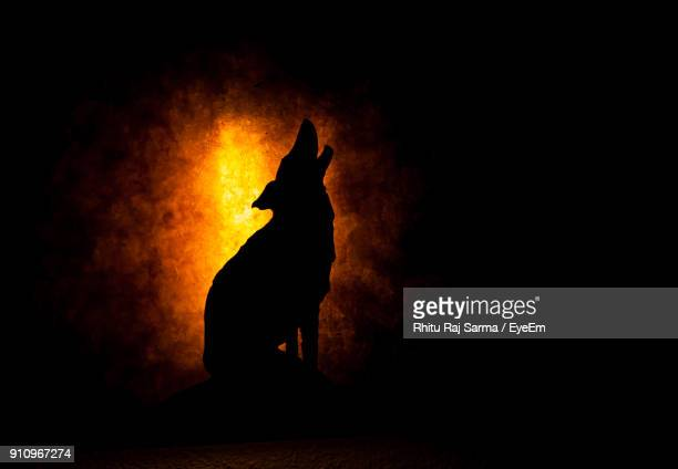 Silhouette Wolf At Night