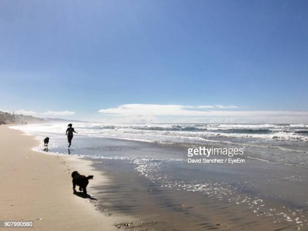 Silhouette Woman And Dogs At Beach On Sunny Day
