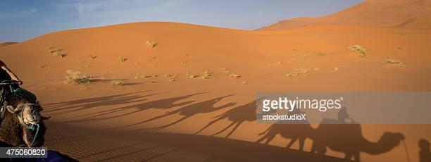 Silhouetted Camelos no deserto de Saara