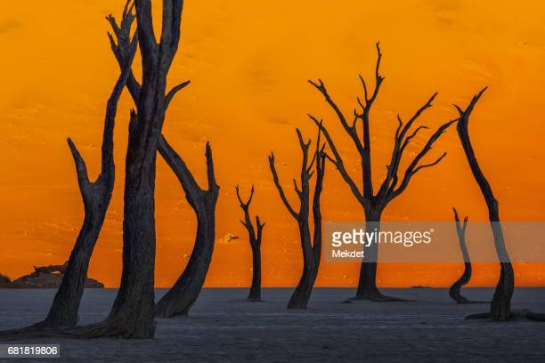 Silhouetted dead Acacia tree with sand dunes at Dead Vlei, Namibia.