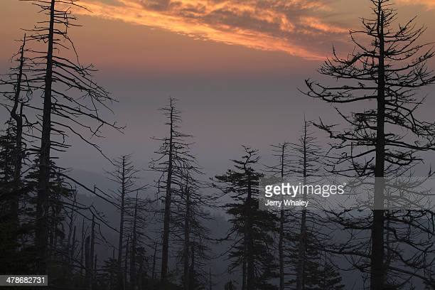 silhouetted dead trees at clingmans dome - clingman's dome - fotografias e filmes do acervo