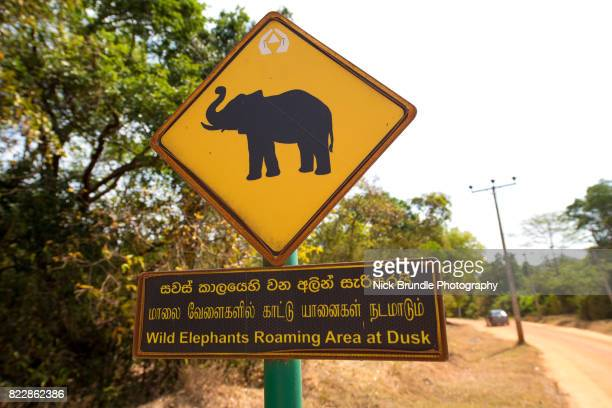 silhouetted elephants on a yellow road sign - animal crossing stock pictures, royalty-free photos & images