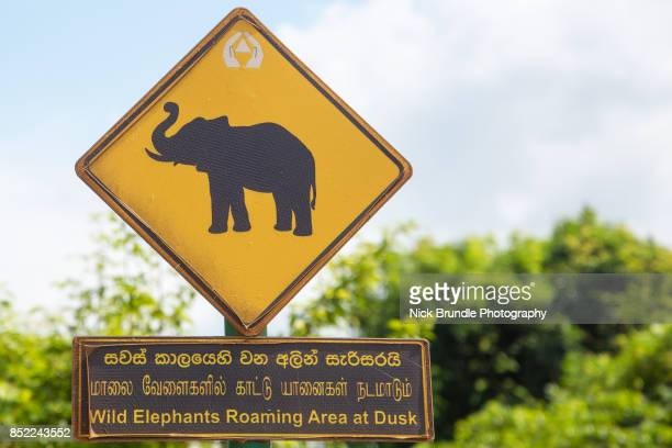 Silhouetted elephants on a yellow road sign