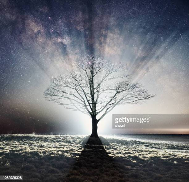 silhouetted in starlight - single tree stock pictures, royalty-free photos & images