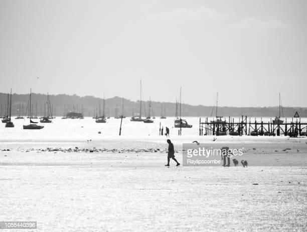シルエットの大人のカップルを行使し、維持に合う poole 港の干潮時に河口干潟に犬の散歩します。 - プール湾 ストックフォトと画像